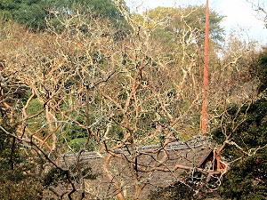さるすべりの木のてっぺん