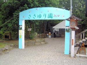ささゆり園 大神神社のささゆり