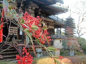 聖林寺の南天・千両