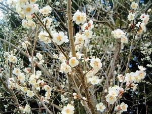 高松塚古墳の梅
