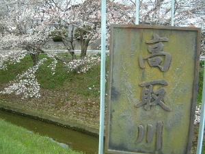 高取川の桜