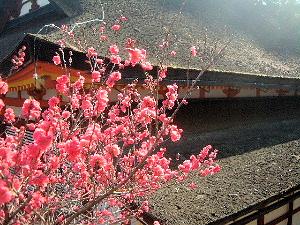 談山神社の境内に咲く花