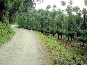 檜原神社への道