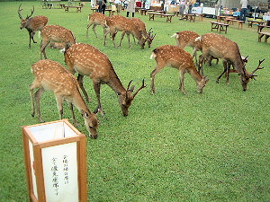 燈花会 奈良公園の鹿