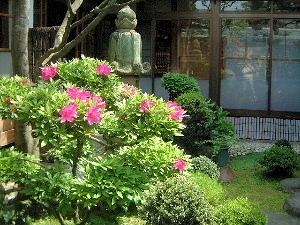 中庭の花 ツツジ