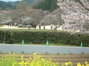 石舞台古墳 桜と菜の花
