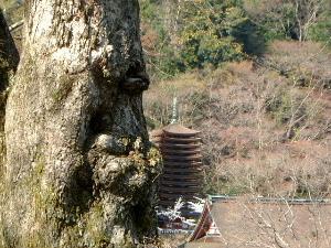 薄墨桜と十三重塔 談山神社