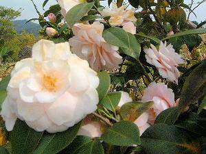 白い花 奈良県立万葉文化館