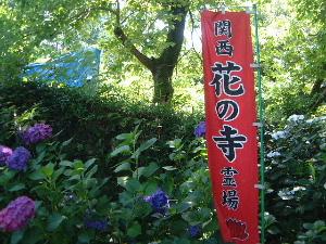 紫陽花 長岳寺参道
